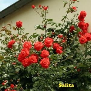 Salita